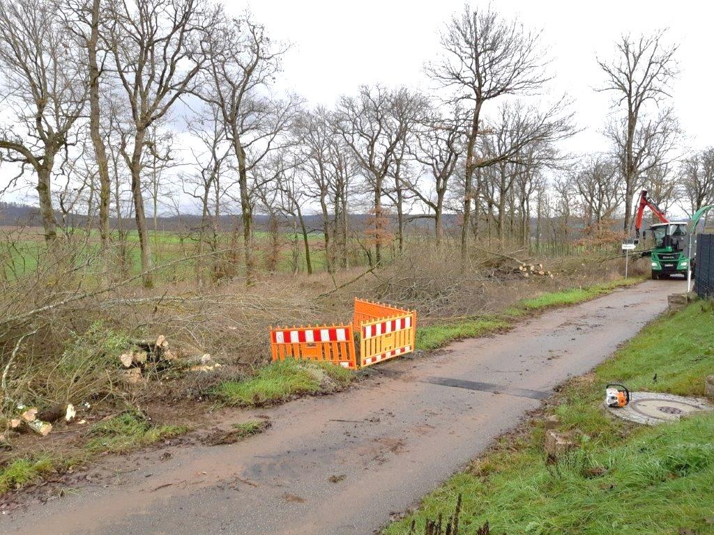 Forstarbeiten an der Deponiegrenze